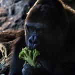 (面白動画) モノを食べている可笑しく愛らしい動物たち!