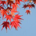 定山渓の紅葉2014の満喫方法は?いろんな乗り物で楽しく観光!
