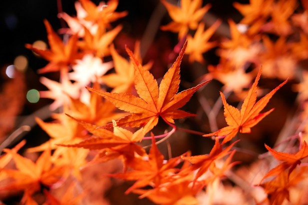 諏訪峡紅葉
