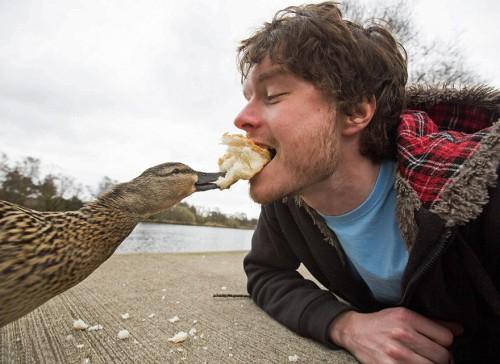 funny-animal-selfies-allan-dixon-3