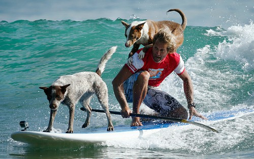 two-Dogs-surfing_3590186b