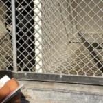 保護施設に収容された犬たちに本を読み聞かせ続けた6歳の自閉症の少年