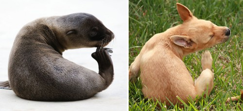 funny-seals-look-like-dogs-43-574ed0a4c820f__880