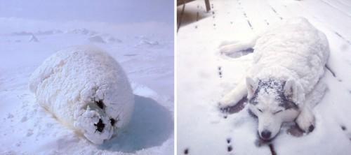 seals-look-like-dogs-1-574d4ed8db35b__880