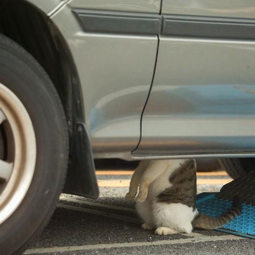 tokyo-stray-cat-photography-busanyan-masayuki-oki-japan-a17-57616a1d47d44__700