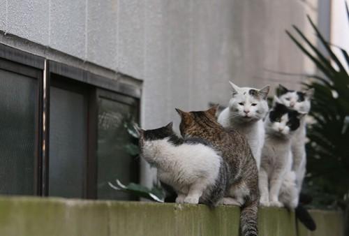 tokyo-stray-cat-photography-busanyan-masayuki-oki-japan-a25-57616a39efdd9__700