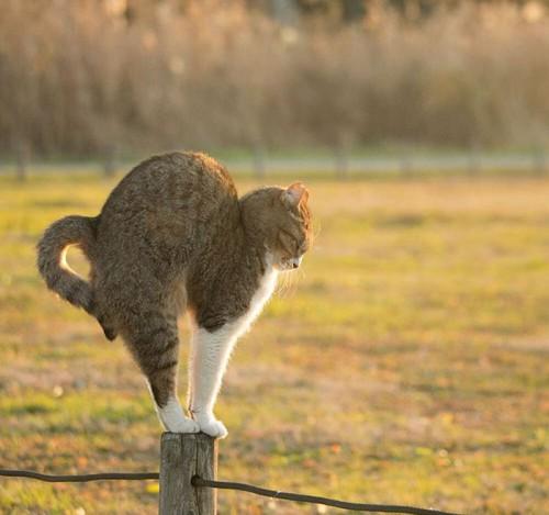 tokyo-stray-cat-photography-busanyan-masayuki-oki-japan-a4-576169f36613f__700