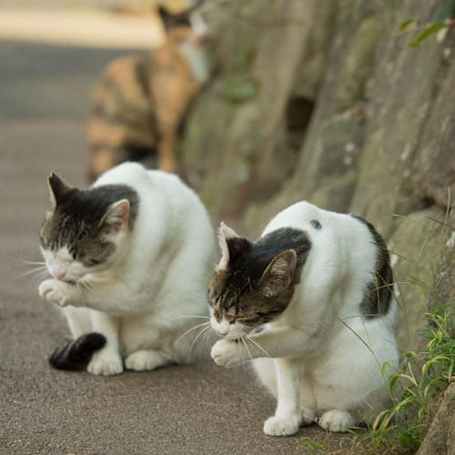 tokyo-stray-cat-photography-busanyan-masayuki-oki-japan-a43-57616a6c4b6d8__700