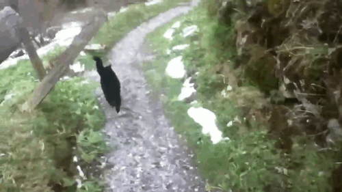 2 cat-guide-man-mountain-gimmelwald-switzerland-2