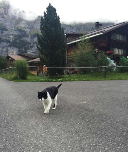 3 cat-guide-man-mountain-gimmelwald-switzerland-4