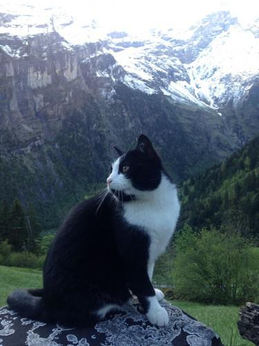 4 cat-guide-man-mountain-gimmelwald-switzerland-3