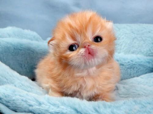 cute-kitten-61-57b32666478e1__605-2