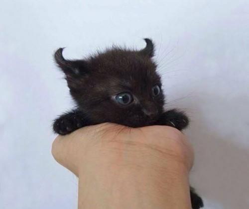cute-kittens-11-57b30aa95f3c6__605