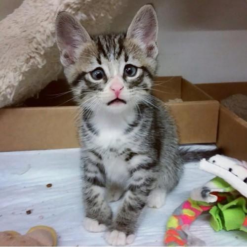 cute-kittens-14-57b30aafd3a33__605