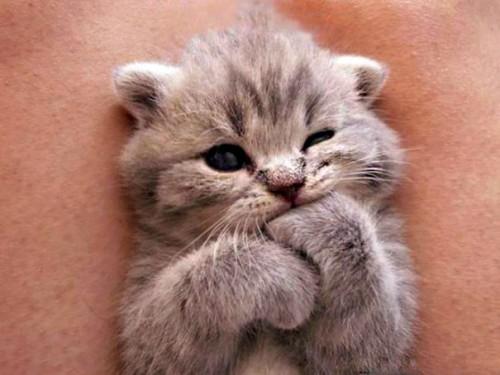 cute-kittens-30-57b30ad41bc90__605