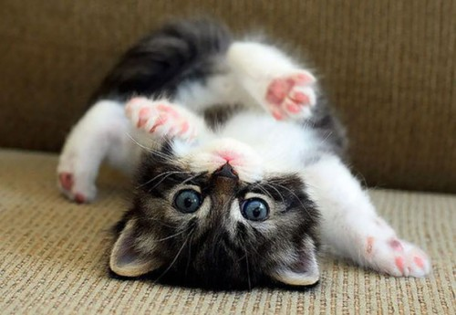 cute-kittens-31-57b30ad5ccbc8__605