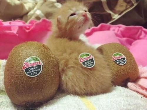 cute-kittens-67-57b32a998544a__605