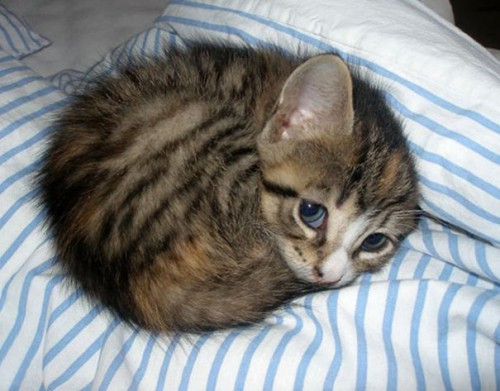 cute-kittens-69-57b32c431e8a7__605