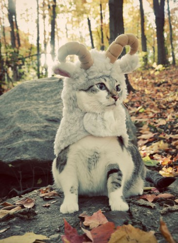 halloween-cat-costumes-49-57f76fc58c1d2__605