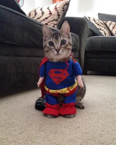 halloween-cat-costumes-55-57f7873add679__605