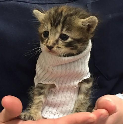 kitten-tube-sock-sweater-hurricane-matthew-4
