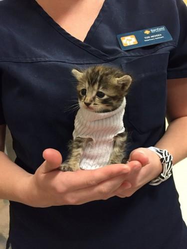 kitten-tube-sock-sweater-hurricane-matthew-9