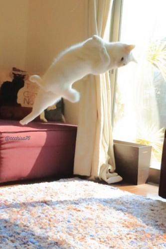 ballet-cat-japan-45
