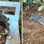ペットと飼い主の絆〜1年経ってもご主人さまが忘れられないネコ