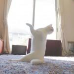 ご主人さまの留守中にペットはこんなことをしていた!?バレリーナ猫
