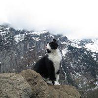 スイスの山で道に迷ってしまった男性を猫が道案内!